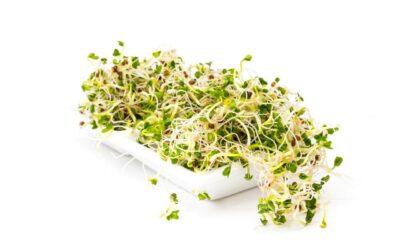 A brokkolicsíra hatásai